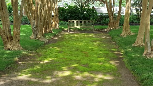 Mossy paths